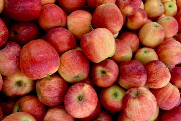 Sprzeczne informacje nt. dynamiki eksportu polskich jabłek