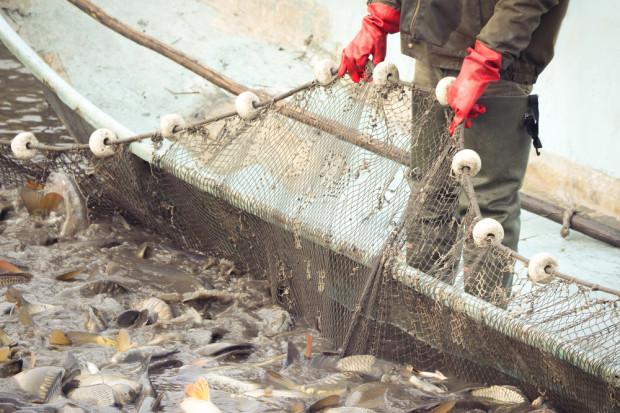 Nadal zbyt dużo ryb jest odławianych (raport)
