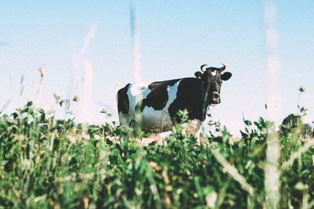 Francja chce oznaczenia pochodzenia produktów mlecznych i mięsa