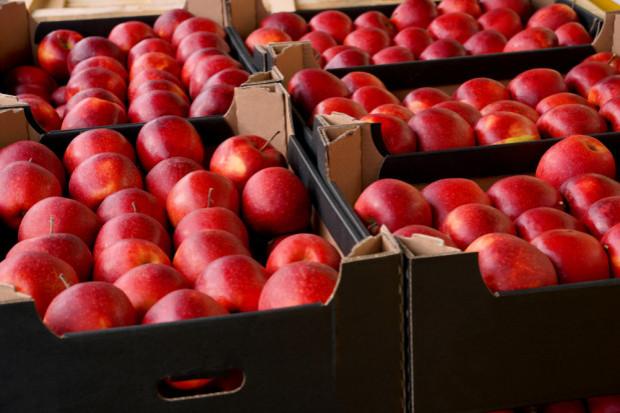 Popyt na polskie jabłka nie jest tak wysoki jak w poprzednim sezonie
