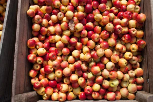 Eksporter: ceny jabłek będą powoli rosły