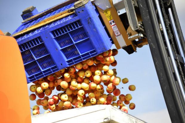 Przetwórnie jabłek obniżyły ceny