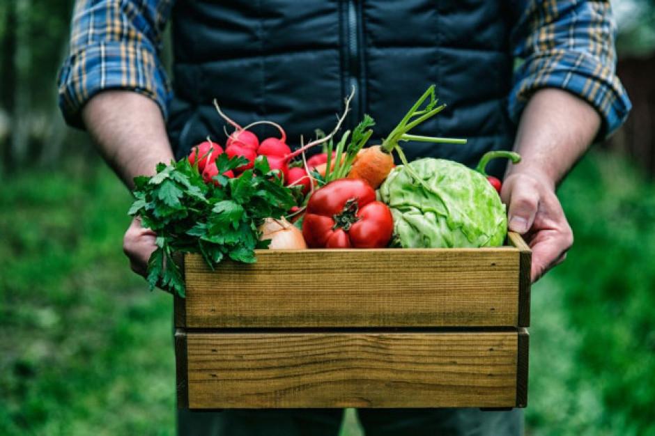 Wytyczne ws. Covid-19 dla rolników zatrudniających cudzoziemców