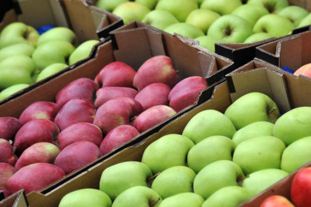 Jabłka w gazetkach handlowych Lidla i Biedronki