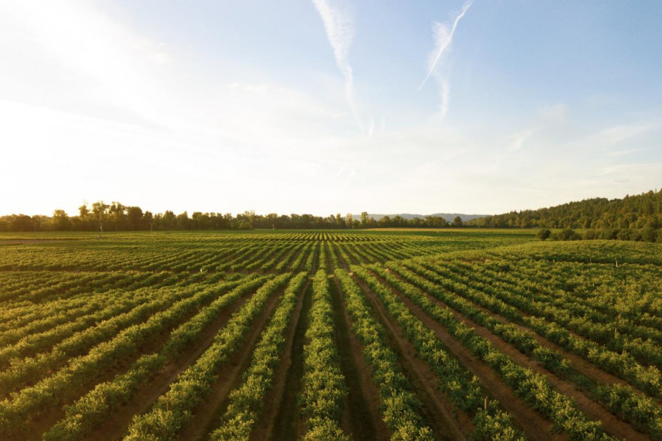 Środki dla wsi i obszarów wiejskich w KPO będą zwiększone