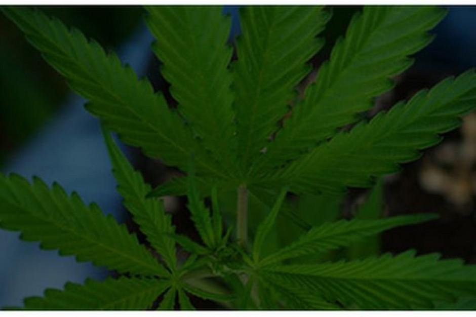 Cannabis Poland z nowym członkiem rady nadzorczej