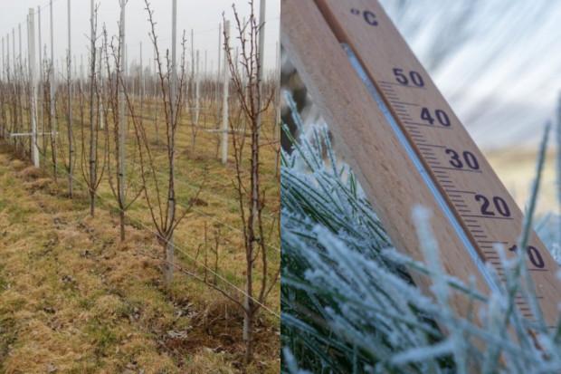 Zimowa aura wpłynie na zbiory owoców w 2021 r.?