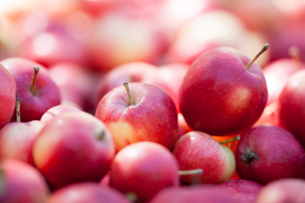Sadownicy: ceny jabłek są za niskie