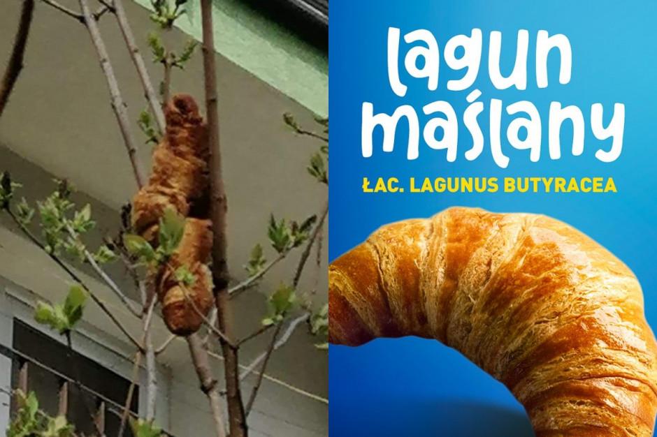 Aldi zaprasza na croissanty, rogale czy laguny maślane