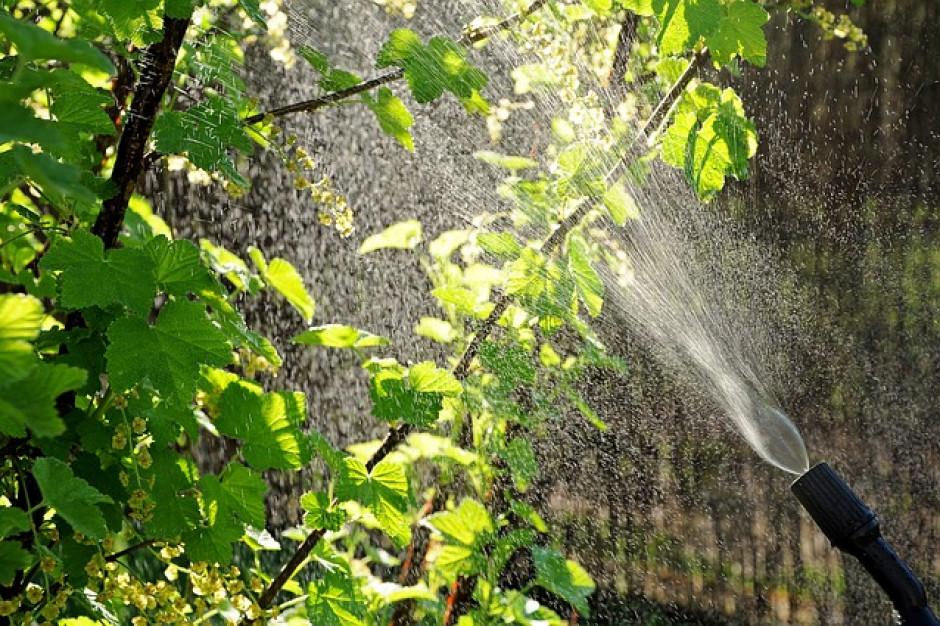 KAS przechwyciła  na granicy nielegalne środki ochrony roślin