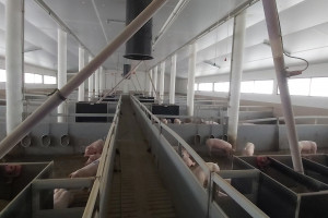 Zdjęcie numer 2 - galeria: Gobarto chce uruchomić 14 nowych hodowli w 2021
