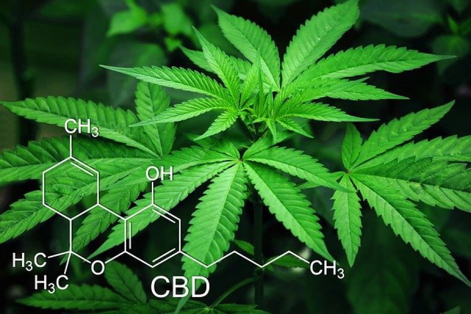 Zespół ds. legalizacji marihuany złożył w Sejmie pakiet projektów ustaw