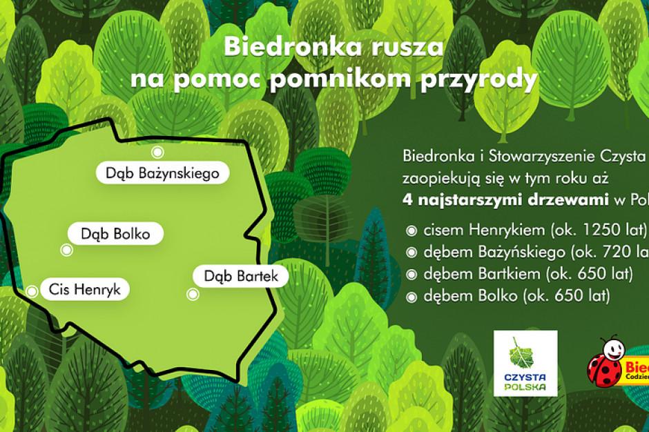Biedronka wspiera najstarsze drzewa w Polsce