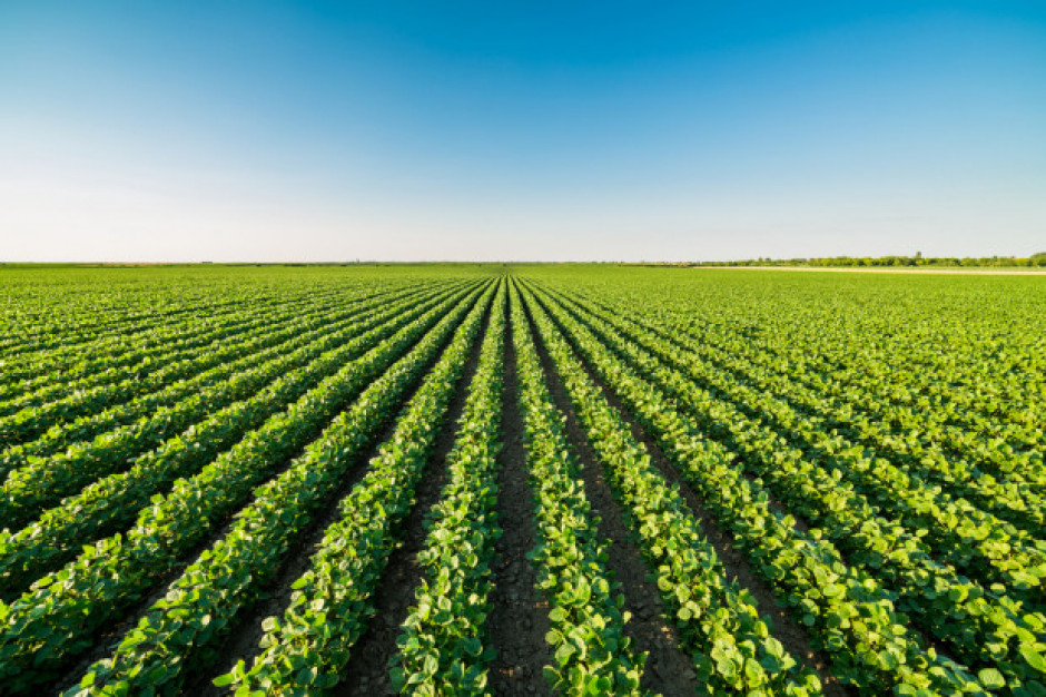 MRiRW: Rolnicza produkcja ekologiczna nie jest zacofana