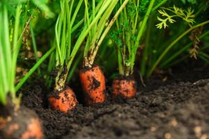 Łódź pomoże mieszkańcom w zakładaniu ogrodów warzywnych