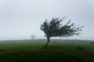 IMGW ostrzega przed silnym wiatrem na północy Polski