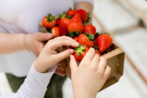 Truskawki 2021. Ile kosztują pierwsze owoce?