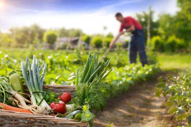Rozwój szarej strefy w rolnictwie