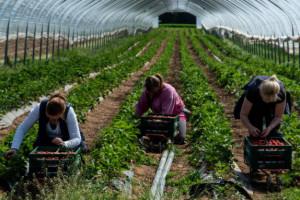 Jak wygląda dostępność pracowników sezonowych dla ogrodnictwa?