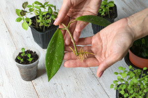 Śląskie: Sadzonki drzew i kwiatów za surowce wtórne