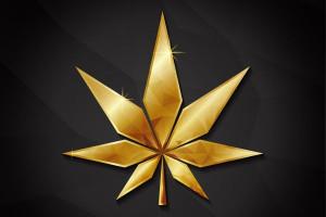 Konopie i marihuana medyczna. Narodziny gwiazdy