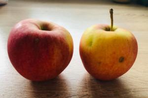 Jabłka po gradzie w trendzie zero waste