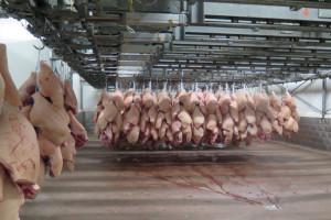 Wielkie fermy trzody w Chinach - skazane na krach?