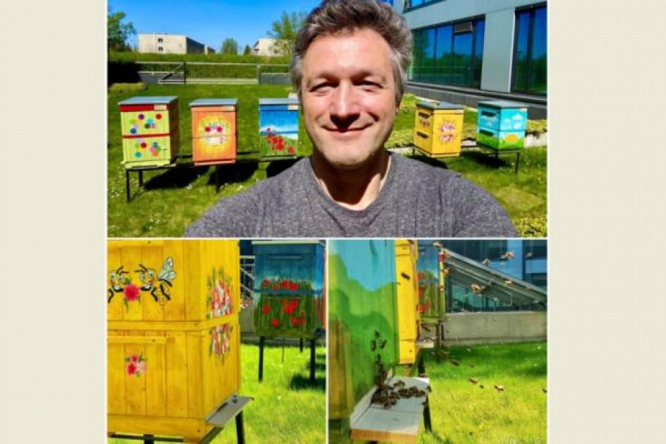W Miasteczku Orange Polska w ulach zamieszkały pszczoły