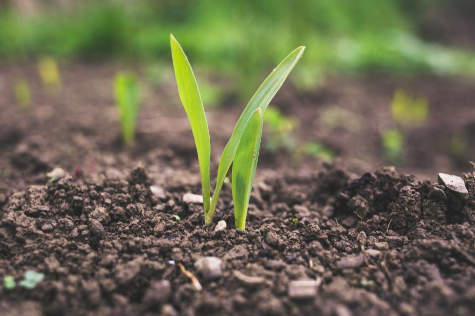 Do 30 czerwca wnioski dla młodych rolników