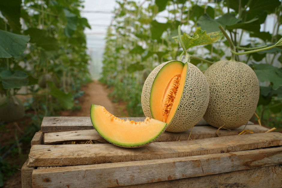Dwa japońskie melony kosztują 91,5 tys. zł