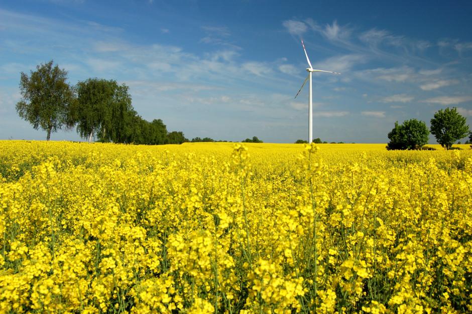 GUS: powierzchnia zasiewów zbóż ozimych zmalała o 5 proc.