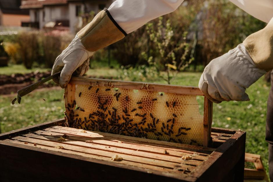 ARiMR: Do końca czerwca wnioski o wsparcie dla pszczelarzy