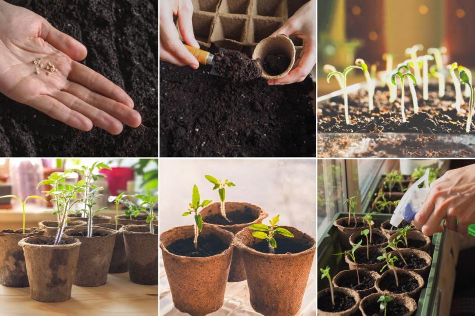 Darmowe nasiona dla ogrodników-amatorów