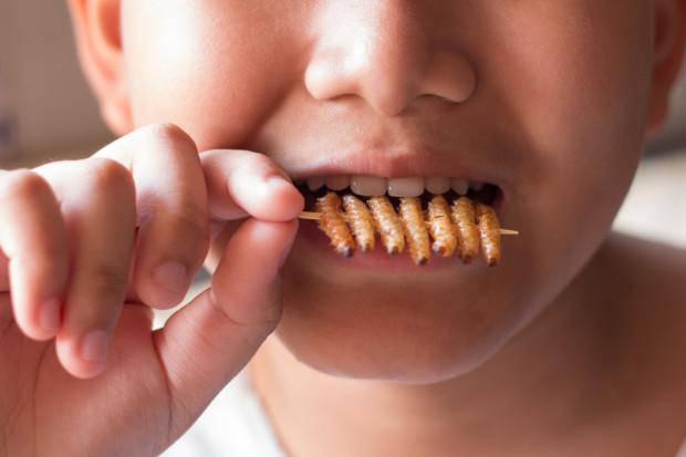 Jedzenie owadów sprzyja wzrostowi mięśni tak jak białko zwierzęce