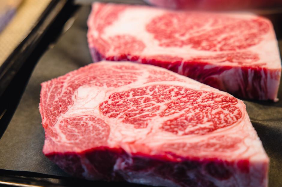 Wypas krów prymitywnych ras w lesie a jakość i smak wołowiny