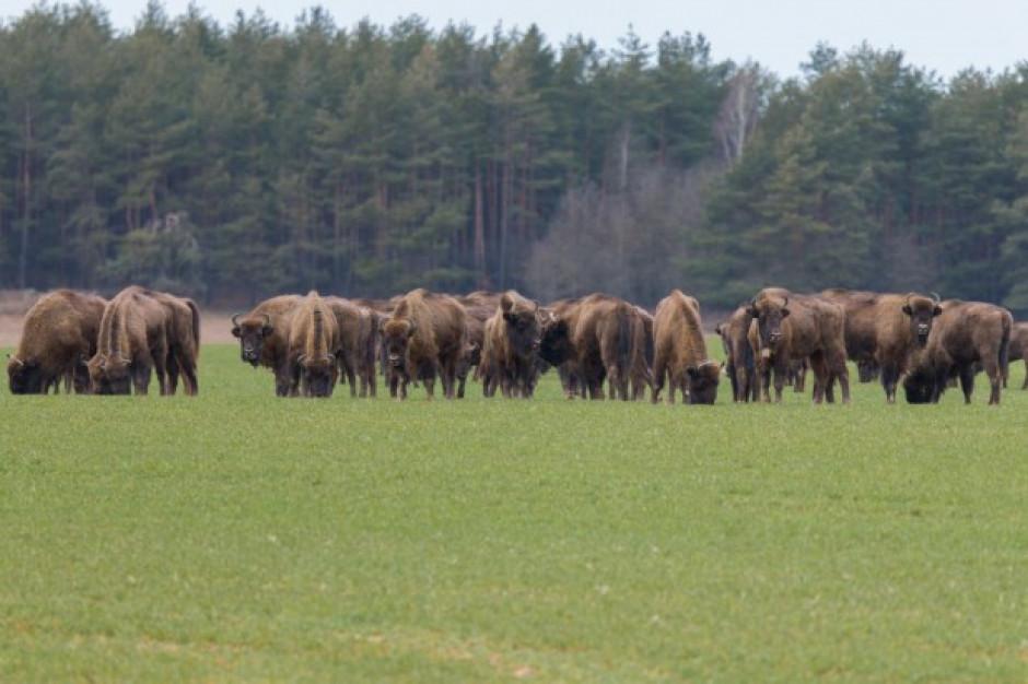 Białowieski Park Narodowy: dzierżawa 125 ha łąk od rolników