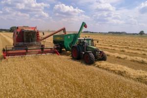 Świat idzie w kierunku rekordowej produkcji zbóż