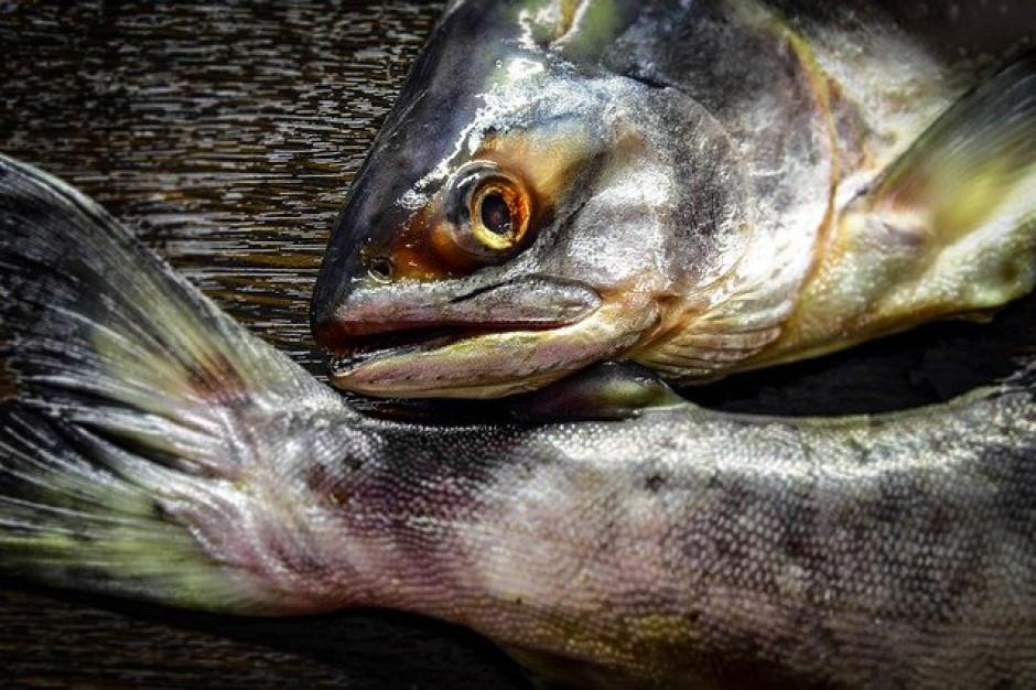 Światowe spożycie ryb mocno wzrosło w ciągu ostatnich 30 lat