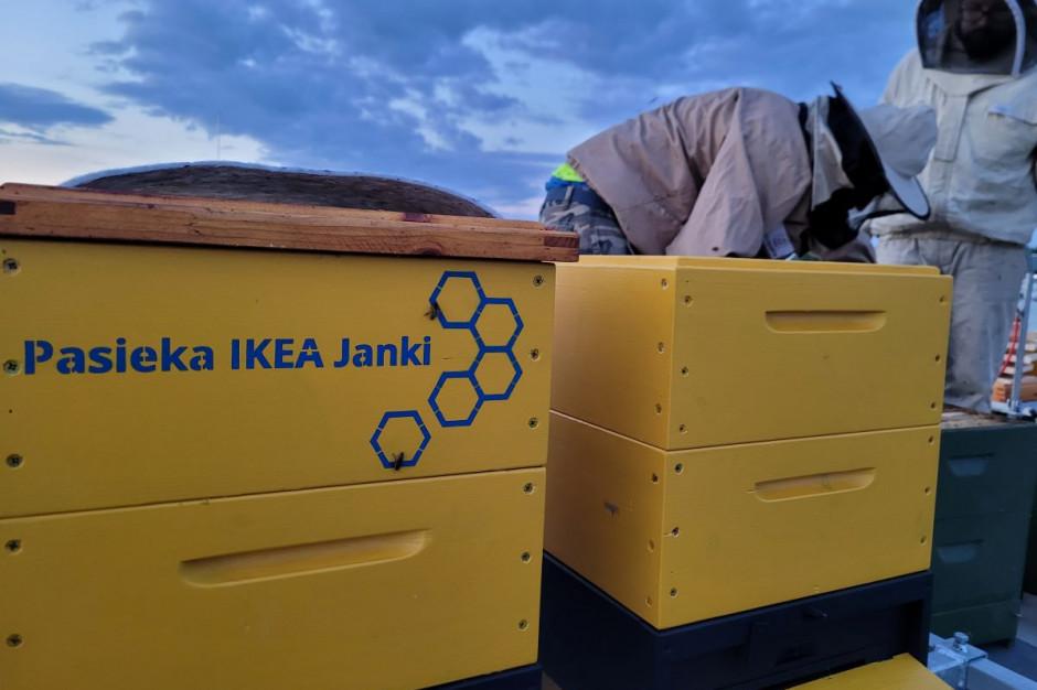 Na dachu magazynu IKEA powstała pasieka