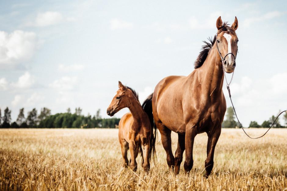 15 koni padło minionej nocy w jednym z gospodarstw
