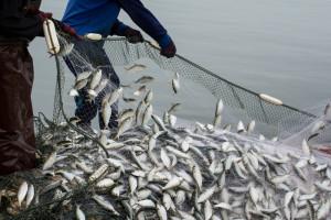 UE i Wielka Brytania zakończyły konsultacje dot. połowów