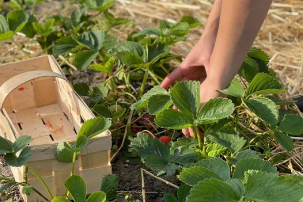 Praca w rolnictwie - ile z tego trafia do budżetu państwa?