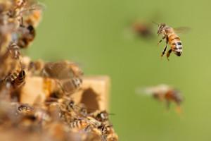 Rój pszczół na znaku drogowym w Warszawie