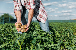 Ekologiczne farmy sposobem na wyżywienie Europy
