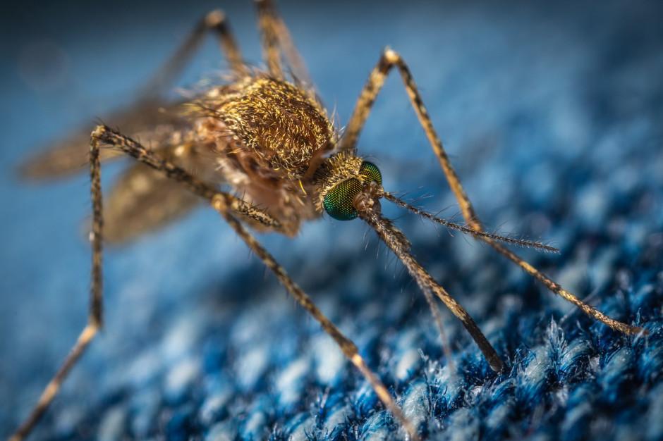 Na co zwracać uwagę kupując produkty na komary? IH radzi
