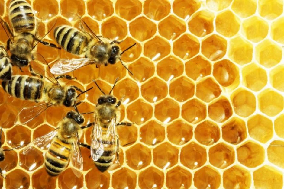 Węgierski minister rolnictwa pokazał pszczelą rodzinę w resorcie