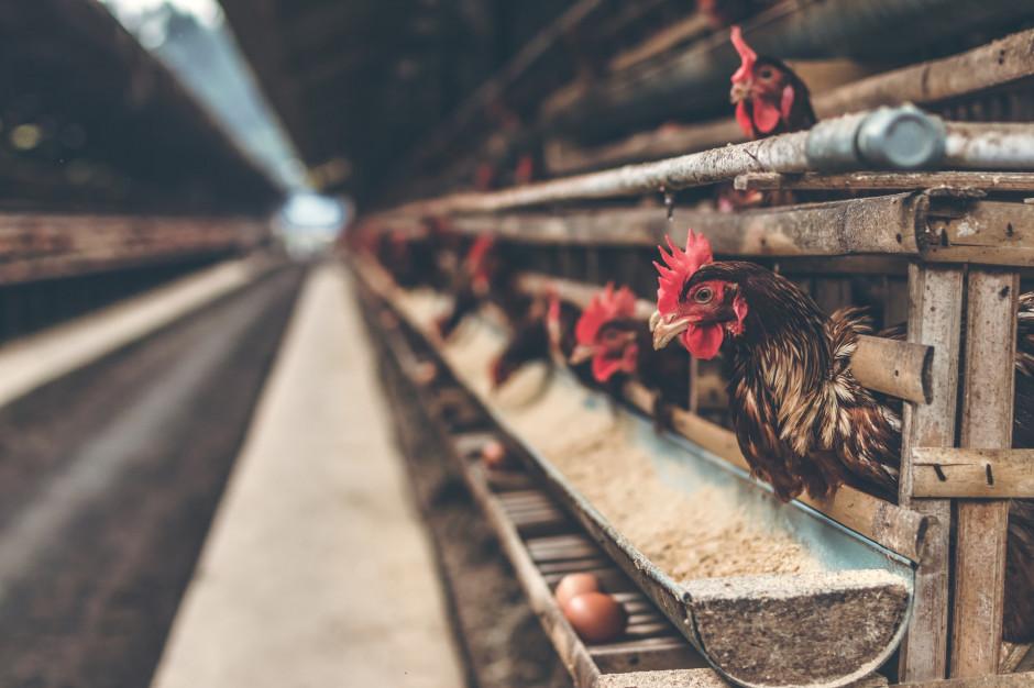 Czym żyła branża mięsna w pierwszym półroczu 2021?
