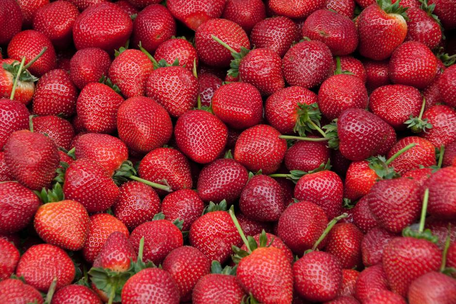 Truskawki 2021: uprawy, zbiory, ceny