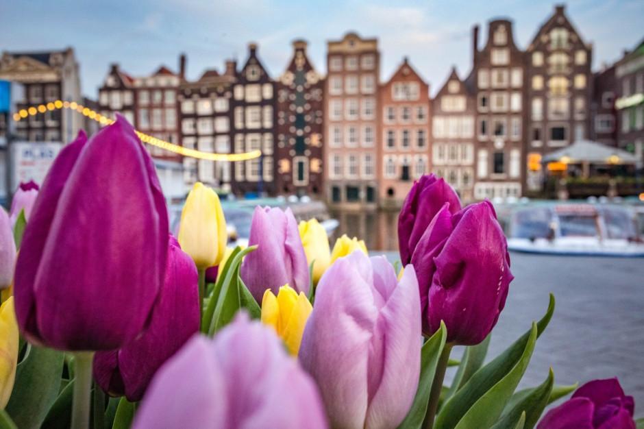 Holandia numerem jeden w eksporcie piwa spośród państw UE