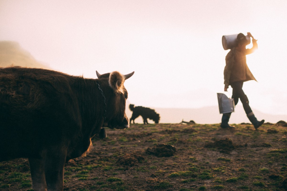 Czy wykorzystamy szansę jaką daje mleko ekologiczne?